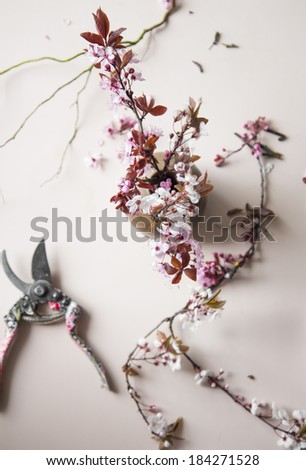 arranging cherry blossom flowers in a pottery vase - stock photo