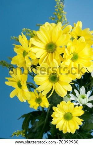array of pretty yellow flowers isolated on blue
