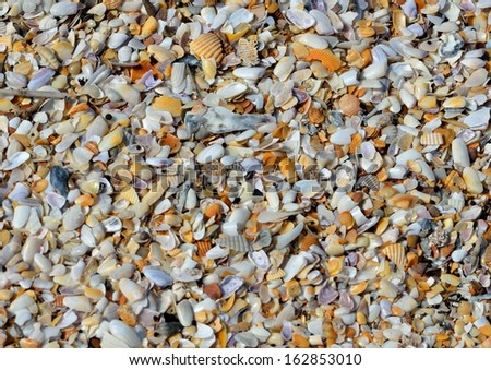 Array of seashells on the beach at Florida.