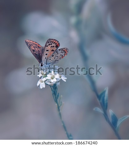 Art and butterfly... - stock photo