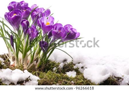 art Beautiful Spring Flowers - stock photo