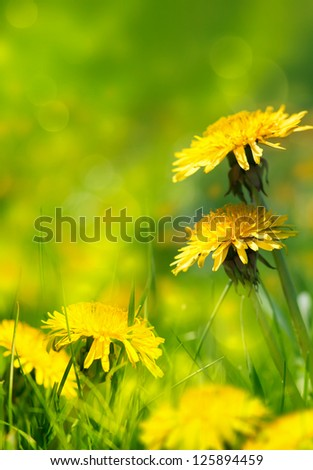 art Beautiful spring flowers background