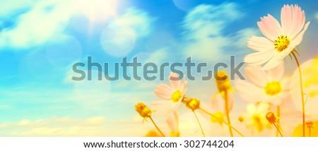 art beautiful summer garden flowers  - stock photo