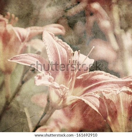 art floral vintage sepia background with light pink lilies - stock photo