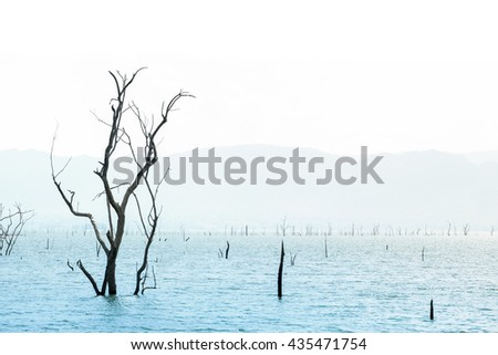 art of dead tree in the lake, background - stock photo