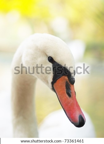 Art portrait of a swan with yellow background blur - stock photo