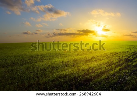 art spring field, sunrise and blue sky - stock photo