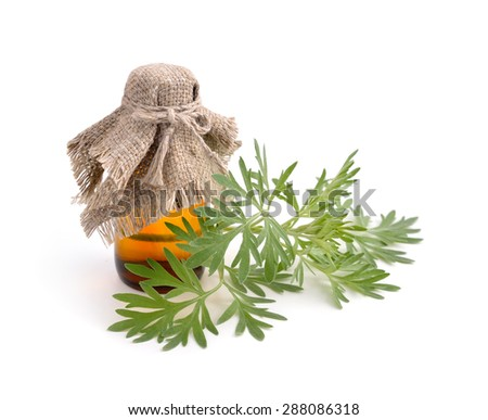 Artemisia absinthium with pharmaceutical bottle. Isolated on white background. - stock photo