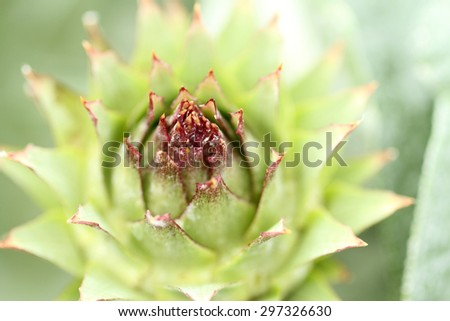 Artichoke flower in a garden.