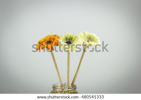 artificial flowers on white background with shadow edge
