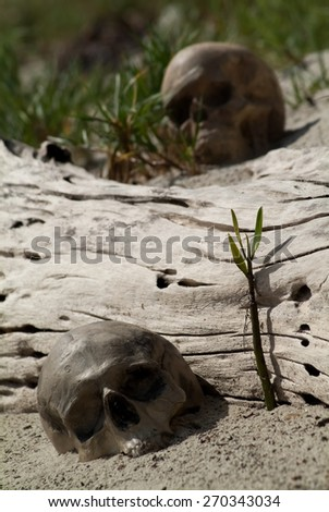 Artificial Human skulls on the sand to sprouted branch - stock photo