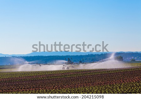 artificial irrigation on a salad field at morning - stock photo