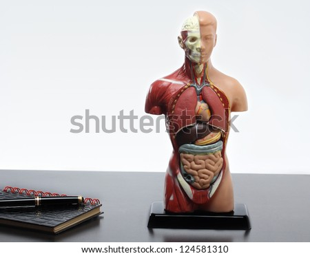 Artificial Model of the human body.Horizontal - stock photo