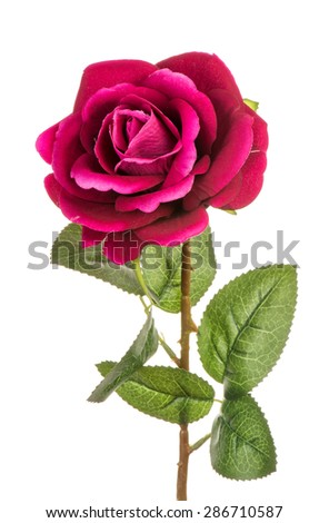 Artificial rose isolated.