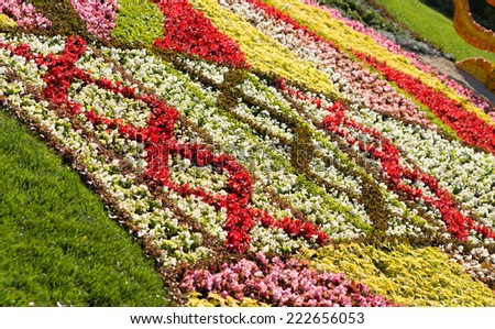 Artistic colorful flowerbeds with assorted colors of flowering plants arranged in geometric patterns in a summer display