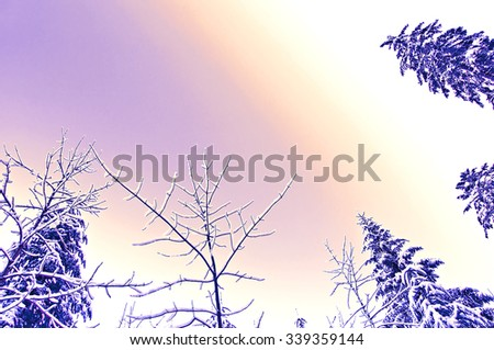 Artistic colorful winter scene of snow-covered treetops in a forest against a purple evening sky - stock photo