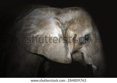 Artistic intent; profile of a sleeping elephant isolated against a black background