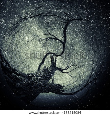 Artistic perspective of a tree created by photo manipulation and texture layers with stars. - stock photo
