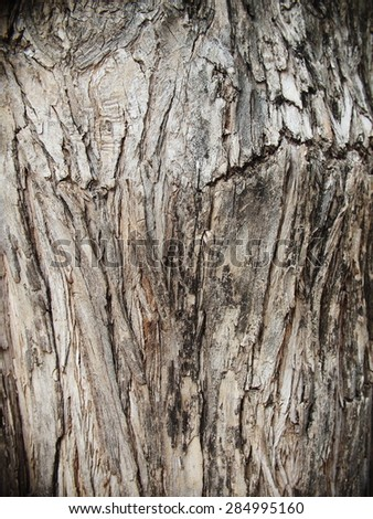 artistic shape free form and brown color elements of crack tropical tree bark close up texture detail. - stock photo