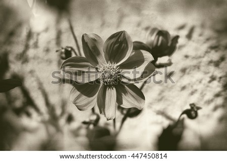 Artistic textured image of flower in sepia with blur. - stock photo