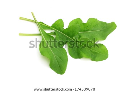 Arugula - stock photo