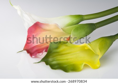 Arum lily - stock photo