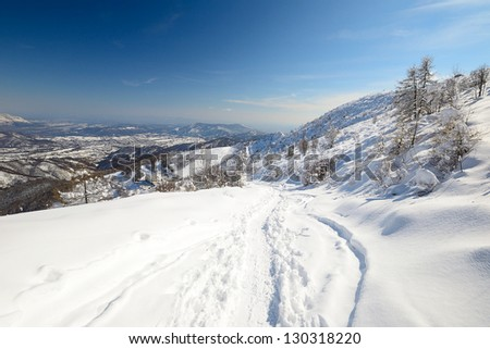 Ascent tour ski tracks on snowy slope with sparse larch and birch tree and winter scenic landscape . Polarizer effect in the sky. Location: western Alps, Piedmont, Italy - stock photo