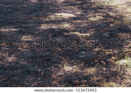 Ash burned dry grass land carbon CO2