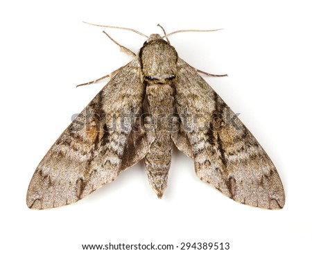 Moth Stock Photos Royalty Free Images Amp Vectors