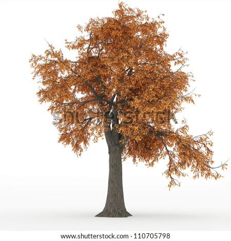 ash tree autumn in 100Mpix - stock photo