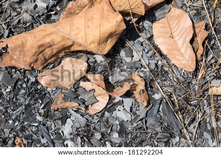 Ashes of fire - stock photo