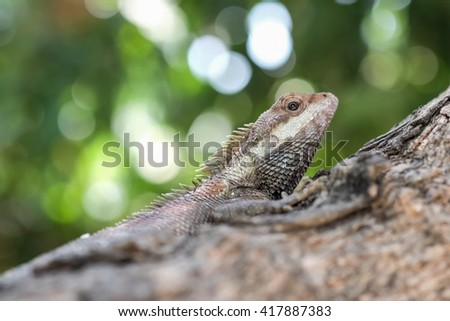 Asia chameleon on tree with nature background
