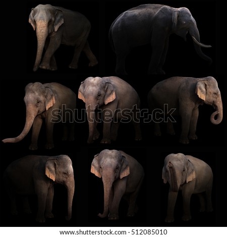 asia elephant hiding in the dark with spotlight