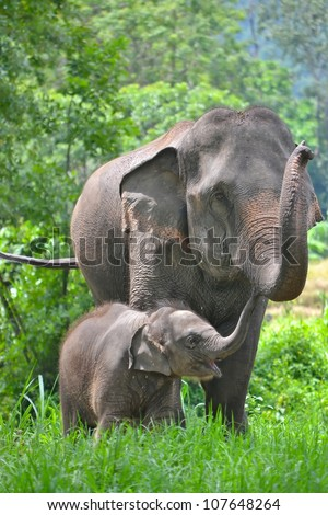 asia elephant mother and baby in forest of southeast asia - stock photo