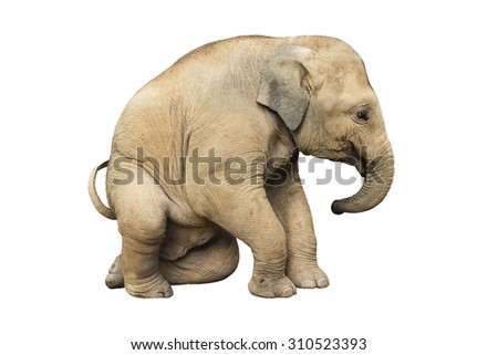 Asia elephant on isolated white background.