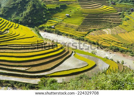 Asia rice field by the river in harvesting season in Mu Cang Chai district, Yen Bai, Vietnam. Terraced paddy fields are used widely in rice, wheat and barley farming in east, south, and southeast Asia - stock photo