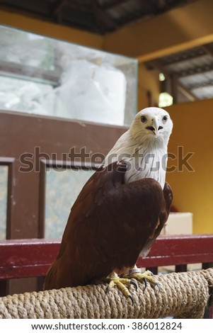 Asia sea Eagle stand on the branch - stock photo