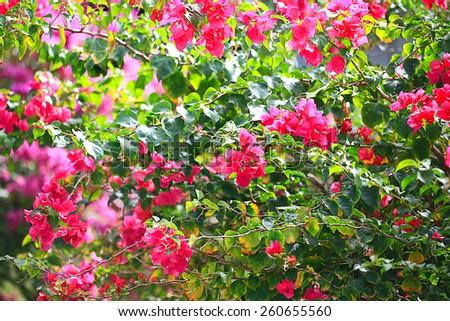 Asia Thailand jungle landscape - stock photo
