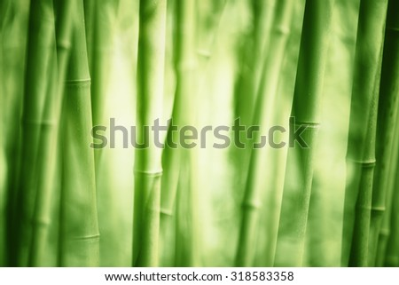 Asian Bamboo forest - stock photo