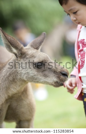 asian boy playing with kangaroo in the shanghai zoo