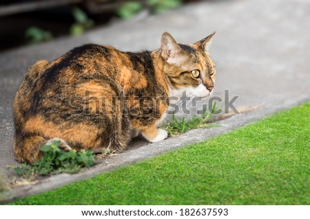 Asian brown cat is prostrate in the park