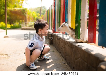 Asian child boy looking goat zoological garden in a sunny day. - stock photo
