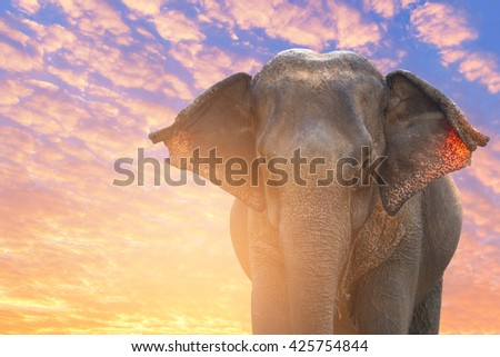 Asian Elephant in beautiful nature sunrise sky and cloudscape background environment  - stock photo