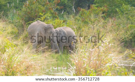 asian elephant in tropical forest, thailand - stock photo