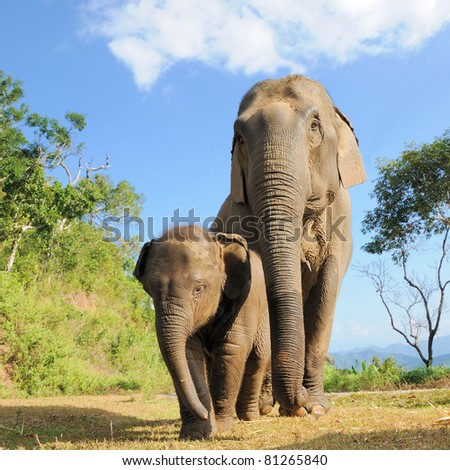 Asian elephant mother and baby,Thailand - stock photo