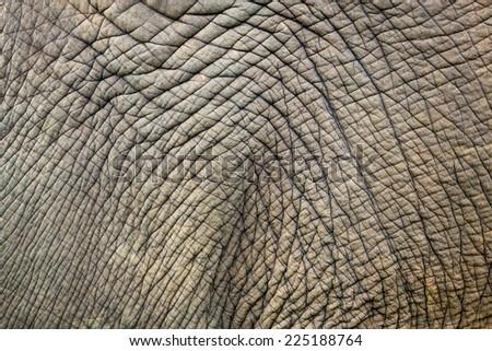 Asian elephant skin. - stock photo