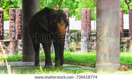 Asian elephant standing in a cage
