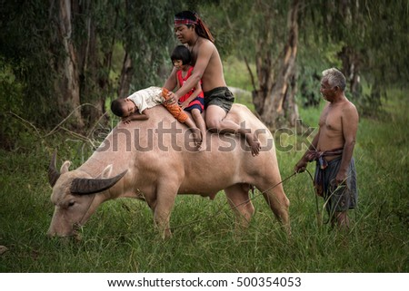 Asian Family come back home with happy face and warmly family. His son drive the buffalo walking in the forest.