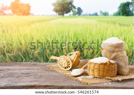 Asian group of grain rice,black rice,red rice ,rice riceberry in gunny bag on old wooden  on rice field background