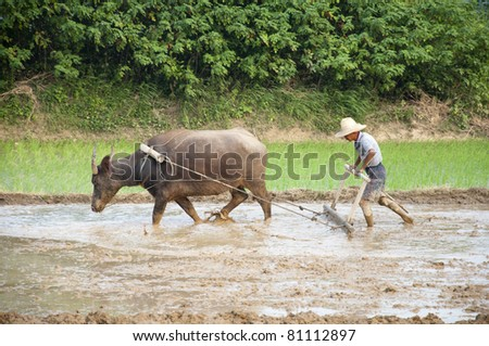Asian peasantry use water buffalo to plow
